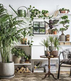 Plantagen / Isabelle McAllister / Johan Orre