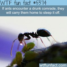: Why ants are much like humans - WTF fun facts | March 13 2016 at 08:46AM | http://www.letstfact.com