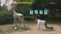 kwangsoo the giraffe