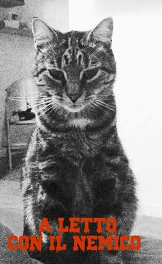 #film #cats