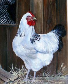 TABLEAU PEINTURE poule Animaux Acrylique - poule