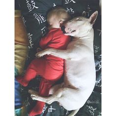 Bull Terriers Sweetest Pair, EBT and friend❤❤ Chien Bull Terrier, Mini Bull Terriers, Miniature Bull Terrier, Bull Terrier Puppy, English Bull Terriers, Pet Dogs, Dogs And Puppies, Dog Cat, Pets