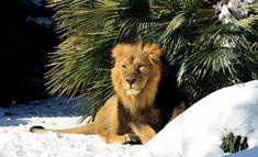 Il Burian non fa paura agli animali del Bioparco di Roma FOTO