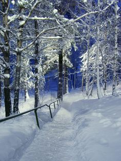 Christmas path ~ Novosibirsk, Russia