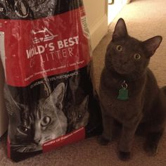 #worldsbestcat - Our cats love worlds best cat litter, and our apartment is almost smell free.