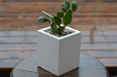 SMALL white concrete planter #concrete #concreteplanter