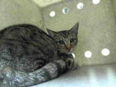 PRADA - A1053645 - - Staten Island  ***TO BE DESTROYED 10/08/15*** Baby PRADA has been brought to the ACC as a STRAY. The 16 week old has barely lived and already may be set to die! She was fearful at first during assessment but when touched,she warmed up quickly. PRADA even enjoyed being held! But what baby doesn't? She earned a terrific AVERAGE rating and as anyone can see,this girl just wants to be loved. Take a chance…instead of going cheap.Go the distance a