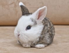 It is not just the real rabbits that are adored by men and women, cute bunny pictures too receive a fair amount of attention from people. Cute Baby Bunnies, Funny Bunnies, Cute Baby Animals, Tiny Bunny, Cute Bunny Pictures, Animal Pictures, Rabbit Pictures, Dwarf Bunnies, Bunny Rabbits