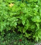 Save the herbs!  Tips and tricks on what to do with leftovers or extras   growinggracefarm.wordpress.com