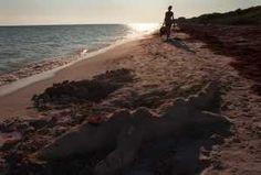 top 10 fl beach camping spots  Times files