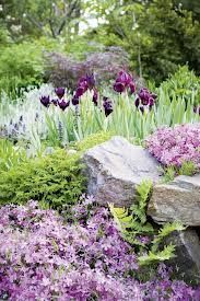 rock garden - creeping phlox and iris Purple Garden, Colorful Garden, Shade Garden, Garden Plants, Tropical Garden, Vegetable Garden, Landscape Design, Garden Design, Creeping Phlox