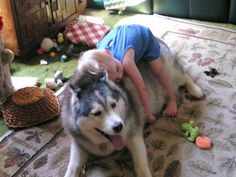 A dog and child