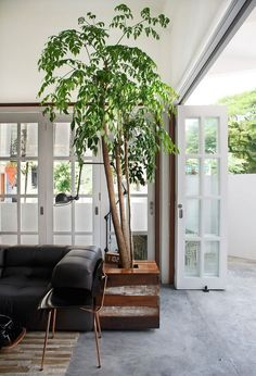 Creative and charming way of adding greenry to your living room