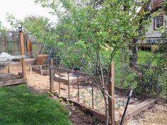 Plum tree and garden beds