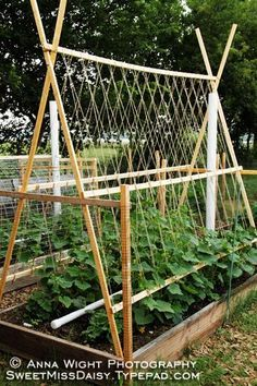 trellis and PVC watering system, as well as other useful gardening tips and ideas. trellis and PVC watering system, as well as other useful gardening tips and ideas.trellis and PVC watering system, as well as other useful gardening tips and ideas. Veg Garden, Garden Trellis, Edible Garden, Garden Beds, Bean Trellis, Vegetable Gardening, Hops Trellis, Bamboo Trellis, Tomato Trellis