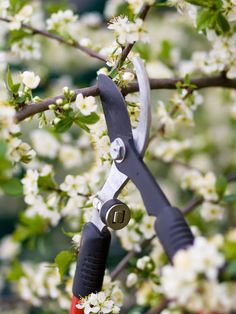 How (and When) to Prune Trees | The Garden Glove