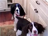 When it's dinner time, Hope and Rosey simply cannot contain their joy! They dance and spin for their daddy, excited for food. Dogs are simply the BEST! Animal Funnies, Funny Animals, Cave Creek, Love Images, Meatball, Happy Dogs, Acorn, Forests, Beautiful Creatures