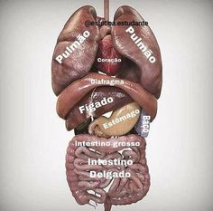 Medicine Notes, Medicine Student, Head Anatomy, Human Body Anatomy, Digestive System Anatomy, Physical Therapy School, Dental Hygiene School, Medical Anatomy, School Study Tips