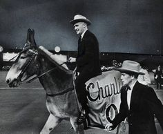 Charles Finley, who owned the Kansas City/Oakland Athletics from 1961-80, was known for diong things his own way. Take for example his determination to do away with the A's elephant mascot after the club moved from Philadelphia, and replace it with a Missouri mule named Charlie O. Here, on the mule's debut night at old Municipal Stadium, he had a handler walk alongside the animal in case it became skittish.
