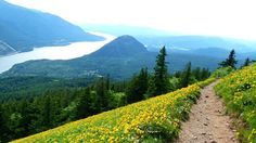 Dog Mountain — Washington Trails Association Best to hike in late May!