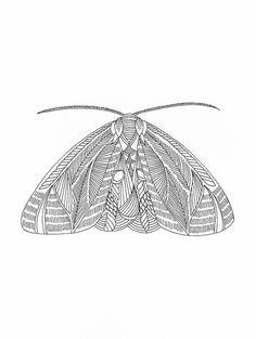 Millie Marotta — Moth series