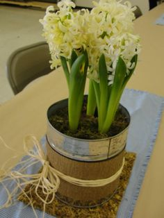 Tin can for centerpiece, fits 6in potted plant!