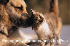 With Tropical Storm Hermine potentially bringing strong winds and coastal flooding, Nassau County SPCA is advising all Long Island pet owners to be vigilant about the safety of their animals. From identification and confinement, to supplies and documentation, the article below has some key tips for ensuring that all pets are just as safe as their owners throughout the storm.