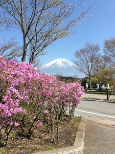 こんにちは~! 今日は暖かくていい天気です♪  富士山の雪もだいぶ溶けてきました!  道の駅のミツバツツジも綺麗な色して咲いています!     是非見に来て下さい♪ 詳しくは http://asagiri-kogen.com/73417/?p=5&fwType=pin