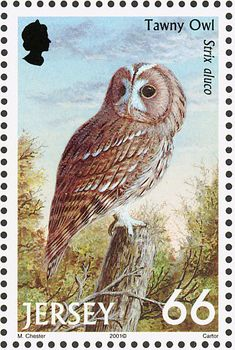 Tawny Owl stamps - mainly images - gallery format Uk Stamps, Sell Stamps, Strix Aluco, Tawny Owl, World Birds, Vintage Stamps, Owl Art, Stamp Collecting, Pet Birds