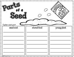 Your scientists will enjoy discovering and learning about seeds and plants with this 40 page product! Your students will explore seeds and watch them grow in a CD case! They will have fun answering riddles, creating a flip book, planting seeds, observing and recording in their journal and more!  Contents: 1.Riddles in black and white and in color. 2.Flower pots in black and white and in color. 3.Journal: -Cover sheet in black and white and in color -K-W-L chart for seeds and plants -P...