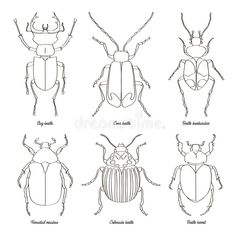 Illustration about Set of beetle illustrations. Vector illustration, EPS Illustration of animal, nature, illustration - 112007705 Outline Illustration, Outline Drawings, Cool Art Drawings, Art Sketches, Nature Illustration, Beetle Drawing, Broderie Simple, Bug Art, Insect Art