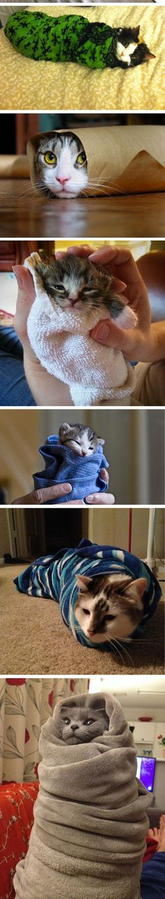 (I Want To Eat Them)...  So precious!! Kitties and Cats don't need a bath, unless some foreseen circumstances take place!