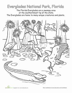This is a drawing of The Everglades National Park. This would be an exciting way to introduce a field trip that the class would later be participating in. Camping Activities, Science Activities, Activities For Adults, Camping Crafts, Lessons For Kids, Art Lessons, Everglades National Park Florida, Swamp Theme, Coloring Book Pages