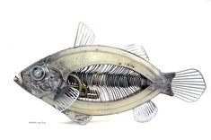 steampunk fish Edouard Martinet