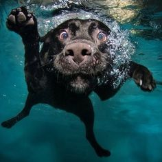 Labs love water