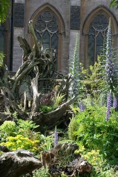 Tower of Jewels, Echiums in the Stumpery at Arundel Castle