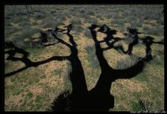 """""""One of the good things to do when the light is overhead and harsh is look for interesting shadows."""" Joshua Tree Shadow, Joshua Tree National Park  Canon EOS-5, 17-35L lens, Fujichrome Velvia"""