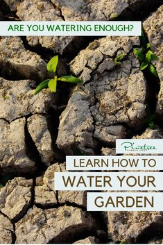 Are you watering enough? Learn how to water your garden in this video from Pinetree Garden Seeds! Gardening For Beginners, Gardening Tips, Rain Collection, Dry Garden, Water Me, Grow Your Own Food, Garden Seeds, Seed Starting, Irrigation