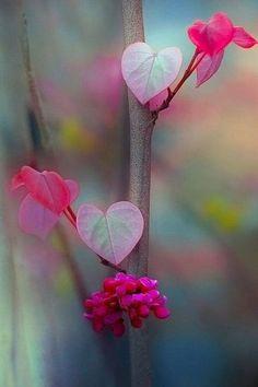 <3 flower