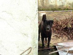 Blackie, the left alone guard dog living next door, living only with his beloved companion the Brick