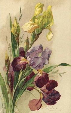Catherine Klein a peint également de trés belles fleurs qui étaient éditées en cartes postales!