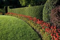 """A List of Fast-growing Privacy Hedges With Good Pictures"" 'Hedges are an excellent way of ensuring privacy, as they are easy on the eyes, and a rather polite way of saying, ""Stay out! Read on to know about privacy hedges that tend to grow fast. Privacy Landscaping, Backyard Privacy, Outdoor Landscaping, Outdoor Gardens, Privacy Shrubs, Landscaping Rocks, Modern Gardens, Landscaping Software, Small Gardens"