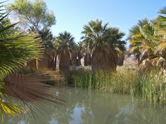 The McCallum pond at the Palm Oasis.  Just a short walk from the visitor center and well worth the effort.