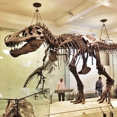 The nationally and internationally acclaimed Museum of Natural history is across Central Park and is the perfect destination after a day in the park. Their dinosaur exhibits are unequalled and are not to be missed!
