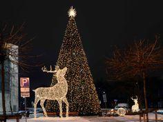 Latvia's largest Christmas tree now interactive, too. Large Christmas Tree, Riga Latvia, Light Decorations, Giraffe, Lighting, Holiday Decor, Animals, Inspiration, Biblical Inspiration