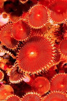 Love the color + texture on this Mushroom Coral. Underwater Art, Underwater Creatures, Ocean Creatures, Underwater Pictures, Sea And Ocean, Patterns In Nature, Sea World, Ocean Life, Marine Life