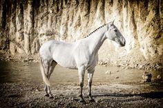 Proud horse by Erik Kunddahl