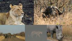 The Simple Life of an Edinburgh Girl: Part 3: Kruger National Park - Mopani, Satara and Pretoriuskop The BIG FIVE SOUTH AFRICA