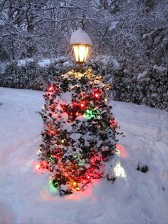 Image from http://www.dumpaday.com/wp-content/uploads/2012/12/tree-in-the-front-yard-outdoor-christmas-lights.jpg.
