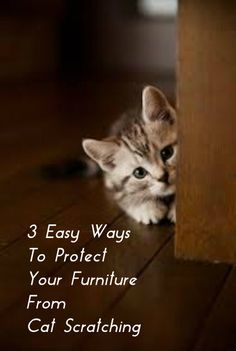 3 Easy Ways To Protect Your Furniture From Cat Scratching . see more at… Crazy Cat Lady, Crazy Cats, Animals And Pets, Cute Animals, Cat Run, Cat Info, Cat Behavior, Cat Scratching, Cat Toys